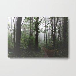 Forest Trail XXXVII Metal Print