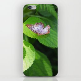 White Peacock Butterfly II iPhone Skin