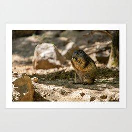 Groundhog during a summer morning Art Print