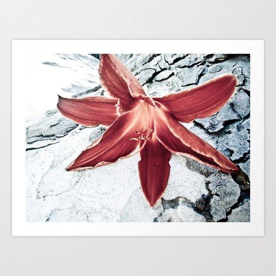 Lone Lilly Art Print