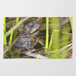 Toad in the pond Rug