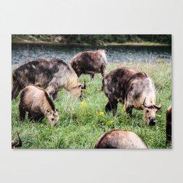 Wilds Trip #5 Canvas Print