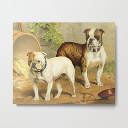 Vintage Painting of English Bulldogs  Metal Print