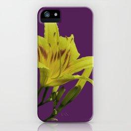 Flores amarillas Hemerocallis del campo iPhone Case