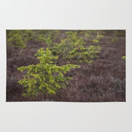 Little Evergreen Rug