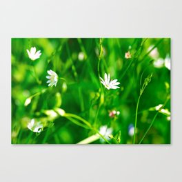 Wildflowers and grass Canvas Print