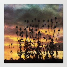 Teasel Silhouette Sunset with Watercolour Effect. Canvas Print
