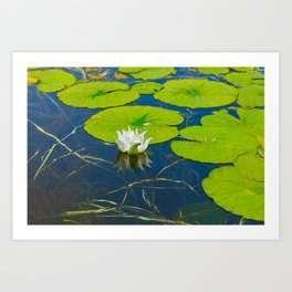 Water Lily and Lily Pads Art Print