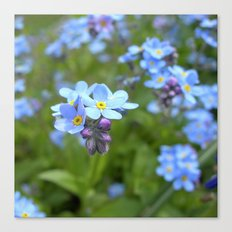 forget-me-not flowers II Canvas Print