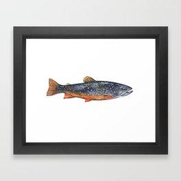 Brook Trout Framed Art Print
