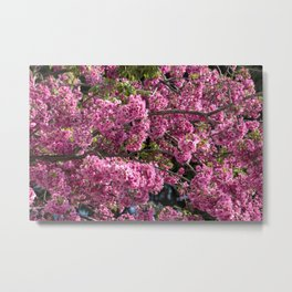 Beautiful pink flowers Metal Print