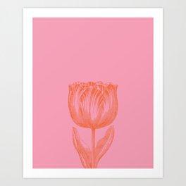 Dutch Tulip Illustration in Pink and Orange Art Print