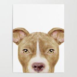 Pit Bull light Brown 2,Dog illustration original painting print Poster