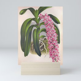 Vintage Lilac Orchid Aerides Fieldingi Lindenia Collection Mini Art Print