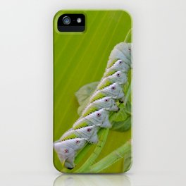 Tomato Horn Worm iPhone Case