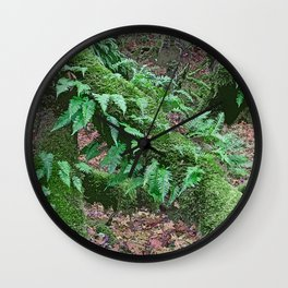 LICORICE FERNS IN MAPLE Wall Clock