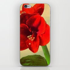 My Christmas flower iPhone & iPod Skin