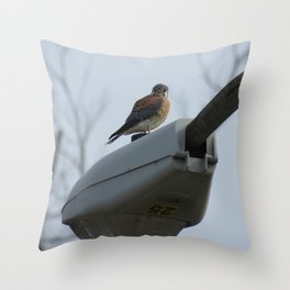 Streetlight sparrowhawk 9 Throw Pillow