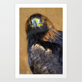 Scottish Golden Eagle Art Print