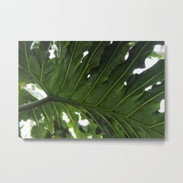 Underside of Tropical Leaf Metal Print