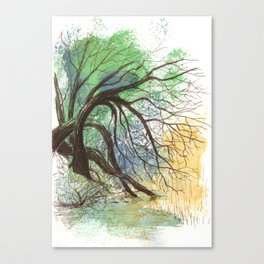 Trees bending over the water Canvas Print