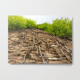 Vines in Mobile, AL Metal Print