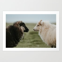 Sheeply in Love - Animal Photography from Iceland Art Print