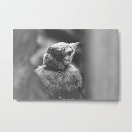 Blue Jay Fledgling Black and White Photography Metal Print