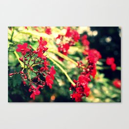 Little Drops Canvas Print