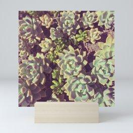 Small Succulents Mini Art Print