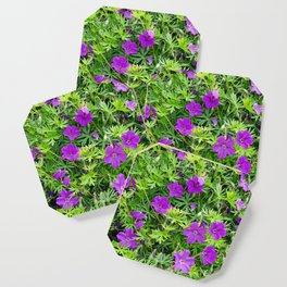 "TRUE SPECIE HARDY GERANIUM ""TINY MONSTER"" Coaster"