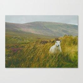 I see ewe on the Sally Gap Canvas Print
