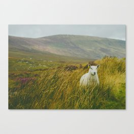 I see ewe on the Sally Gap Canvas Print