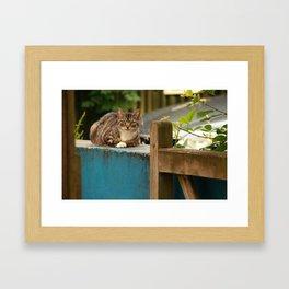Welsh Kitty Framed Art Print