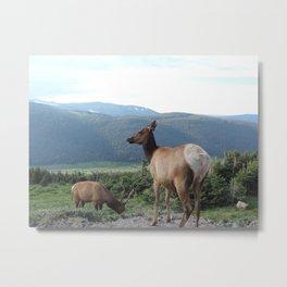 Elk Cow Metal Print