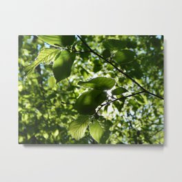 Sunlight Canopy Metal Print