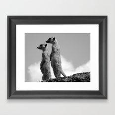 Meerkats, Fuerteventura. Framed Art Print
