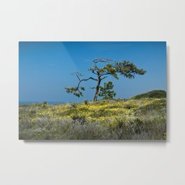 A Torrey Pine on the Cliffs at Torrey Pines State Natural Reserve Metal Print