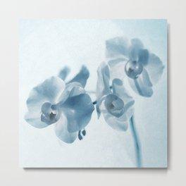 Orchid flowers Metal Print