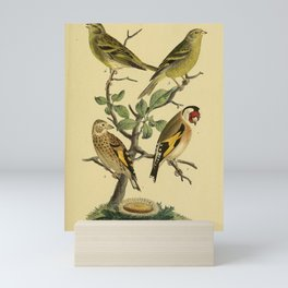 European Goldfinch, Citril Finch1 Mini Art Print