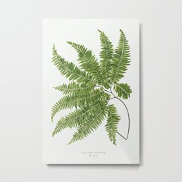 Adiantum Curvatum from Ferns British and Exotic (1856-1860) by Edward Joseph Lowe. Metal Print
