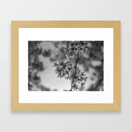 B&W Cherry Blossoms Framed Art Print