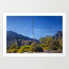 Desert Flowers in the Anza-Borrego Desert State Park, Southern California Art Print