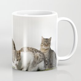 Picture of cats Coffee Mug