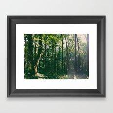 Forest Park Trees Framed Art Print