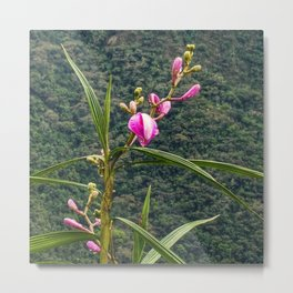 Wild Orchid Buds Metal Print
