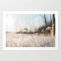Frosty Foliage in Morning Light #2 Art Print