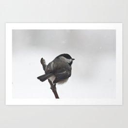 The Bravest Little Chickadee Art Print