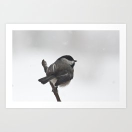 The Bravest Little Chickadee Art Print