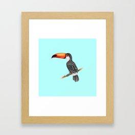 Hornbill Bird - Blue Framed Art Print